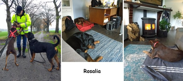 Rosalia8
